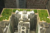 Chicago's City Hall building  green roof.