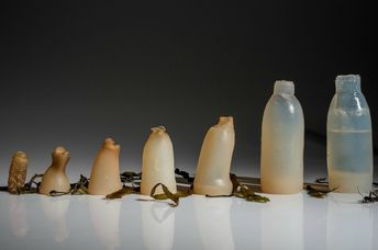 Edible, Algae-Based Water Bottle