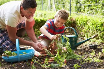 Father and son planting vegetables in the garden