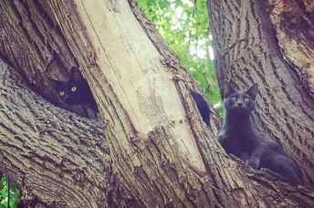 Two cats stuck in a tree