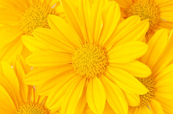 Yellow flowers will perk up your mood.