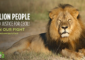 The petition calling for justice for Cecil the Lion
