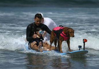 Surf dog Ricochet surfs with boy