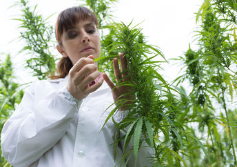 Industrial hemp as thousands of possible applications ranging from clothing to nano-tubes (Photo: Shutterstock)