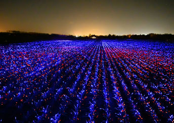 LED photobiology lights glow across a field in the Netherlands, merging art and science.