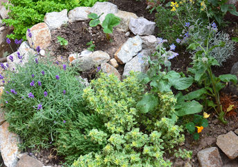 Backyard landscaping that uses native plants.