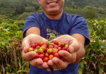 A farmer proudly holds a handful of freshly picked coffee beans.