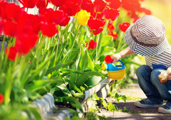 A young boy is watering tulips with a toy watering can.