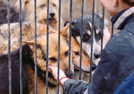 6 Animal Rescue Organizations That Make a Real Difference