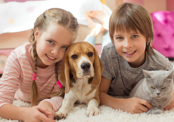 What Is The Best Pet For You Quiz Goodnet