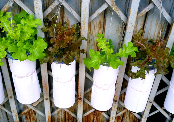 Plants growing in water-based hydroponic systems