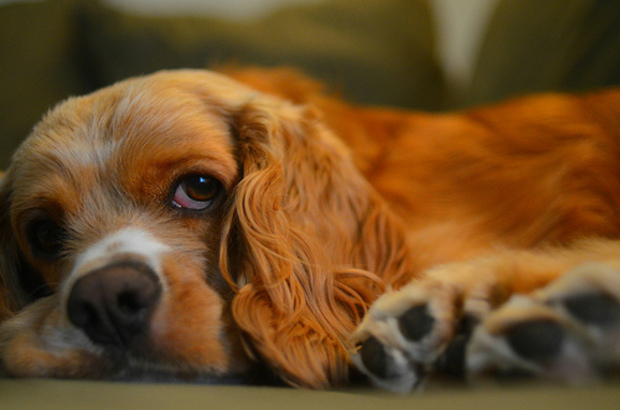 7 of the Cutest Dog Videos of All Time - Goodnet