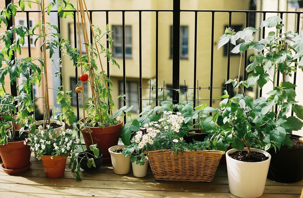 5 Herbs and Veggies that Love Growing Indoors