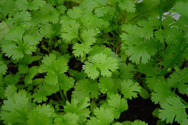 5 Plantes Qui Adorent Pousser En Interieur Webzine Hydropassion