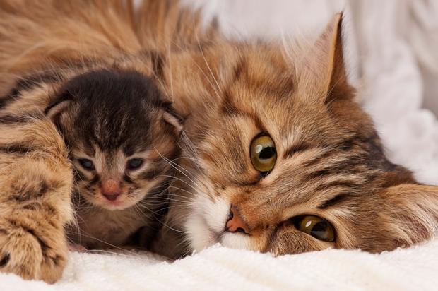 When do kittens open their eyes