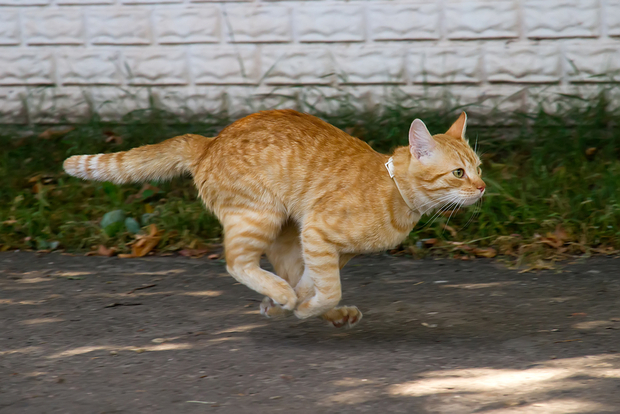 Cat S Nose Is Running
