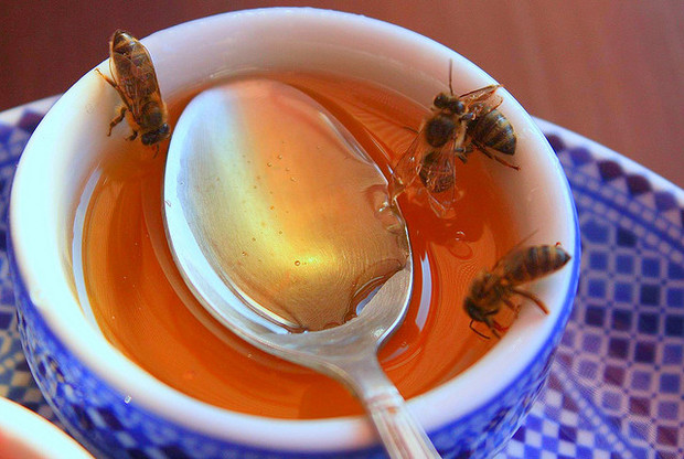African bees in a cup of honey