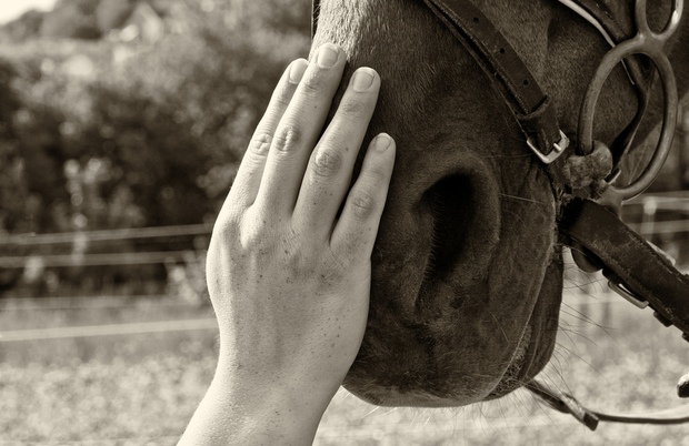 Hand on horse's nose