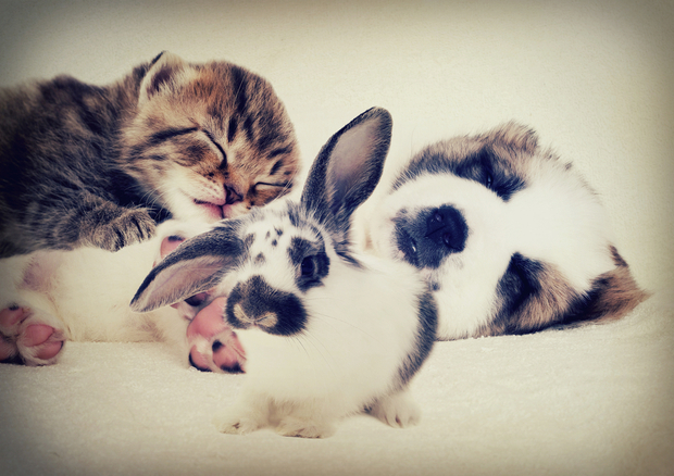 a dog, rabbit and kitten