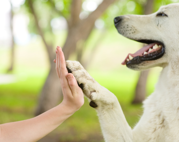 dog and person high five