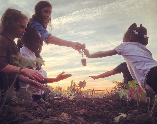 youngsters planting kale