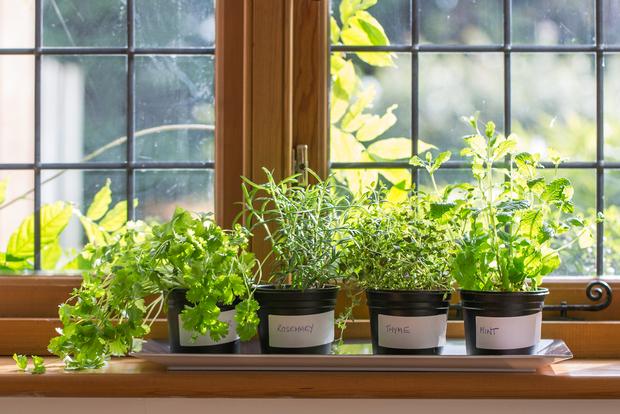 Herbs Growing On A Window Sill