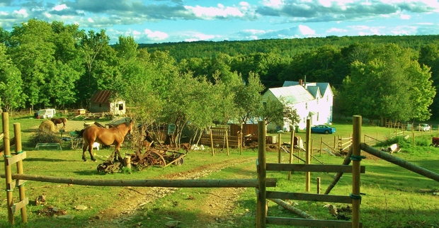 10 Good Questions With Wwoof Goodnet