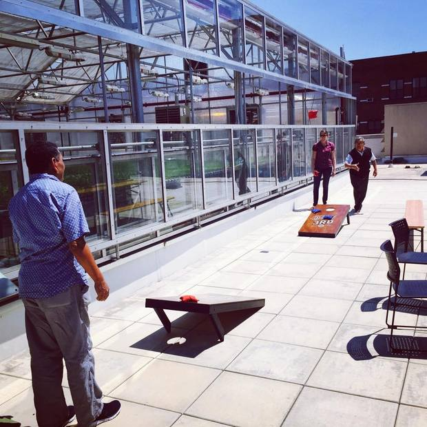 Gotham Greens team plays cornhole