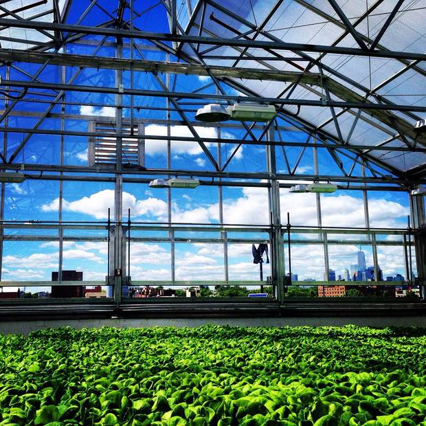 Gotham Greesn greenhouse and city skyline