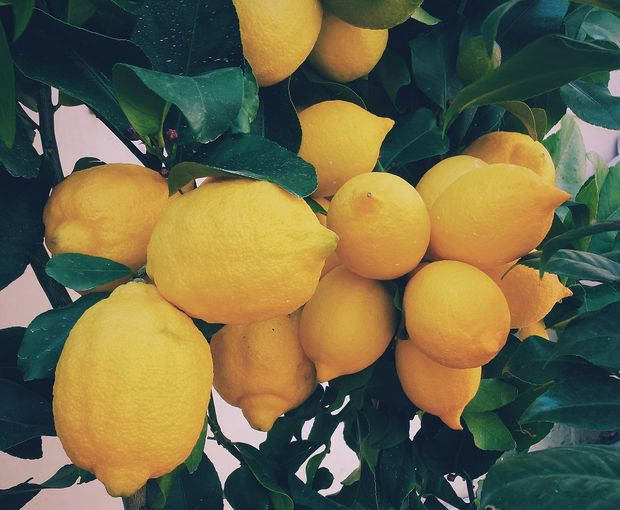 Lemons are one of the healthiest foods on earth