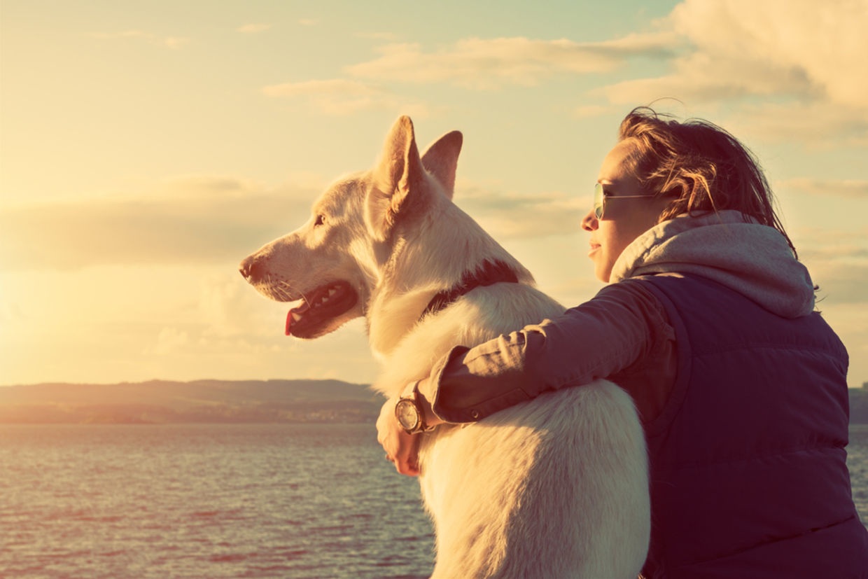 Dogs have been our trusty companions for thousands of years (Photo: Shutterstock)