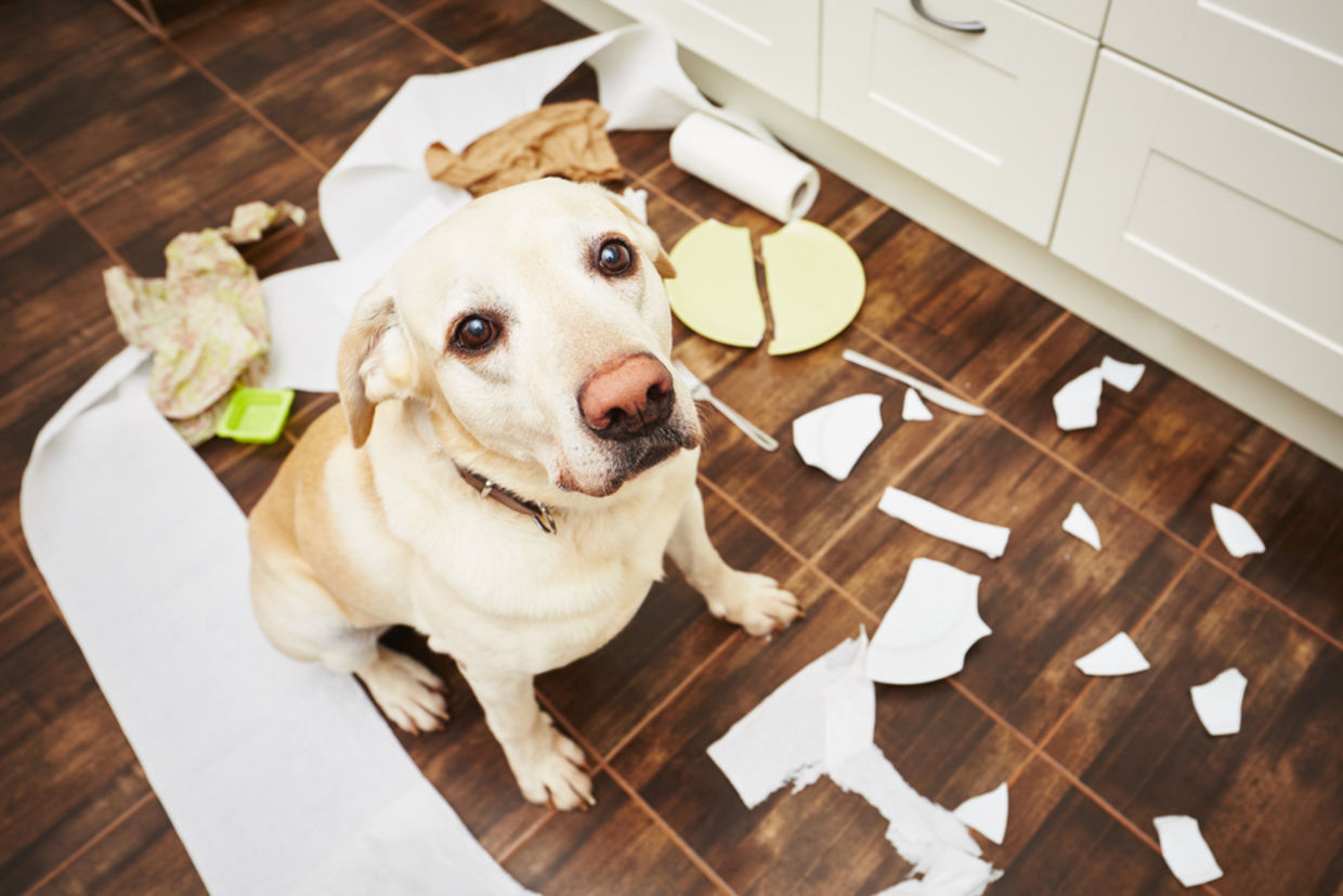 Dogs don't actually feel guilty. (Photo: Shutterstock)