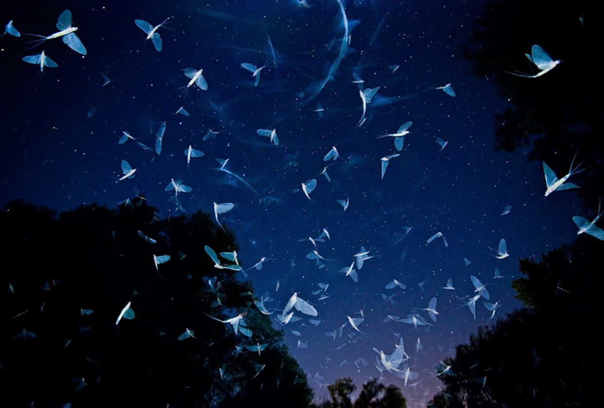 Imre Potyó titled his winning photo of mayflies swarming the River Rába in Hungary Swarming Under The Stars. (Imre Potyó/World Photography Organisation)