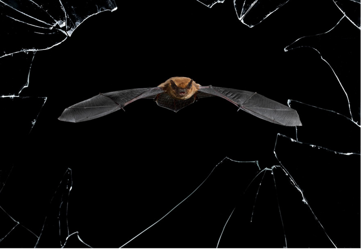 Mario Cea shot this bat getting ready to hunt for dinner in Salamanca, Spain. (Mario Cea)
