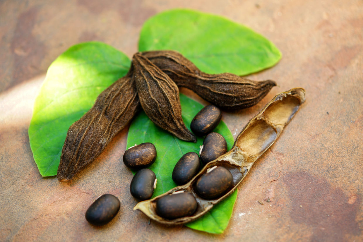 Mucuna has been used in Ayurvedic medicine for over 2,000 years. (Shutterstock)