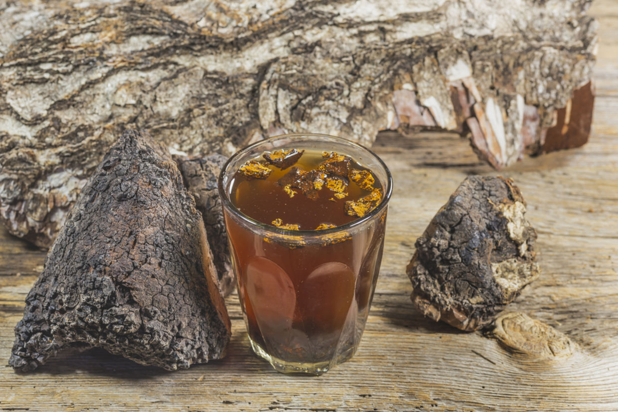 Chaga is by far the most potent antioxidant on the planet. (Shutterstock)