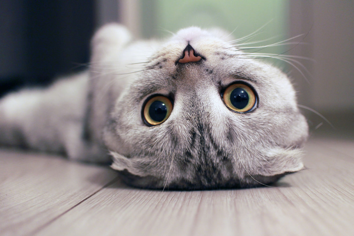 7 Scientifically Proven Health Benefits Of Being a Cat Owner