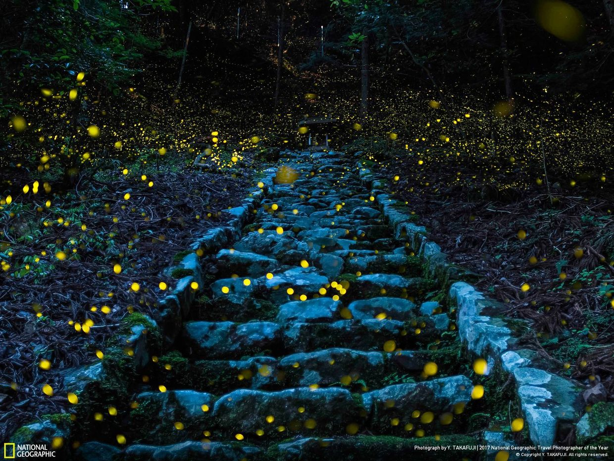 Forest of the Fairy (Photo by Y. Takafuji)