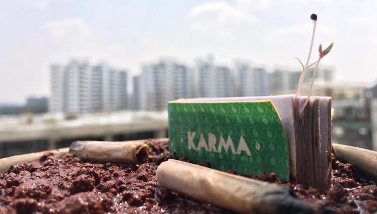 These Biodegradable Cigarette Filters Will Grow Into a Tree - Goodnet