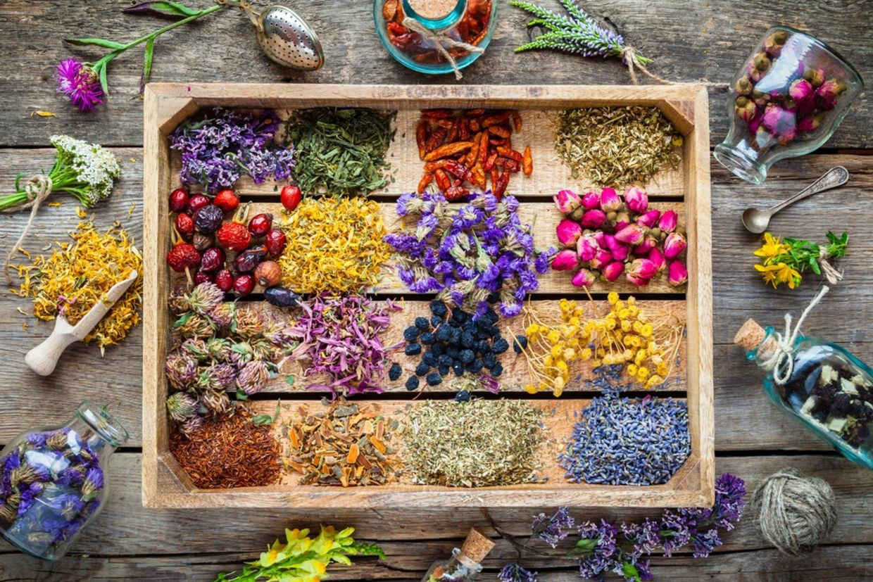 5 Must-Know Herbs for Healing and Well-Being - Goodnet