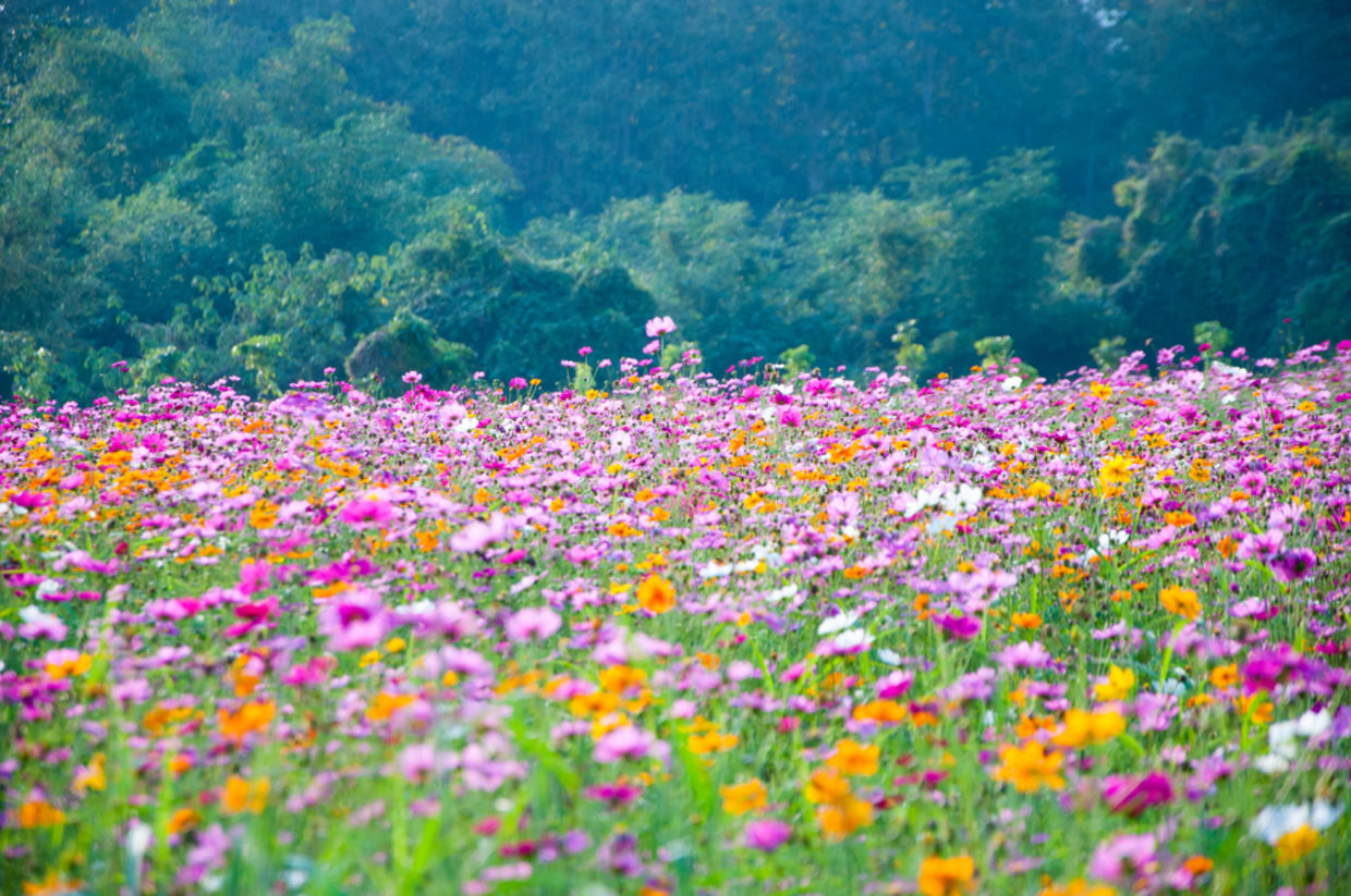 How Planting Wildflowers Could Reduce The Need For Pesticides Goodnet