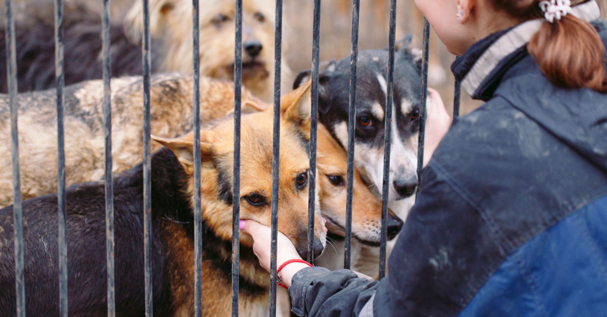 6 Animal Rescue Organizations That Make A Real Difference Goodnet