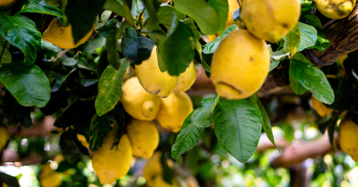 Lemons are one of the healthiest foods in the world
