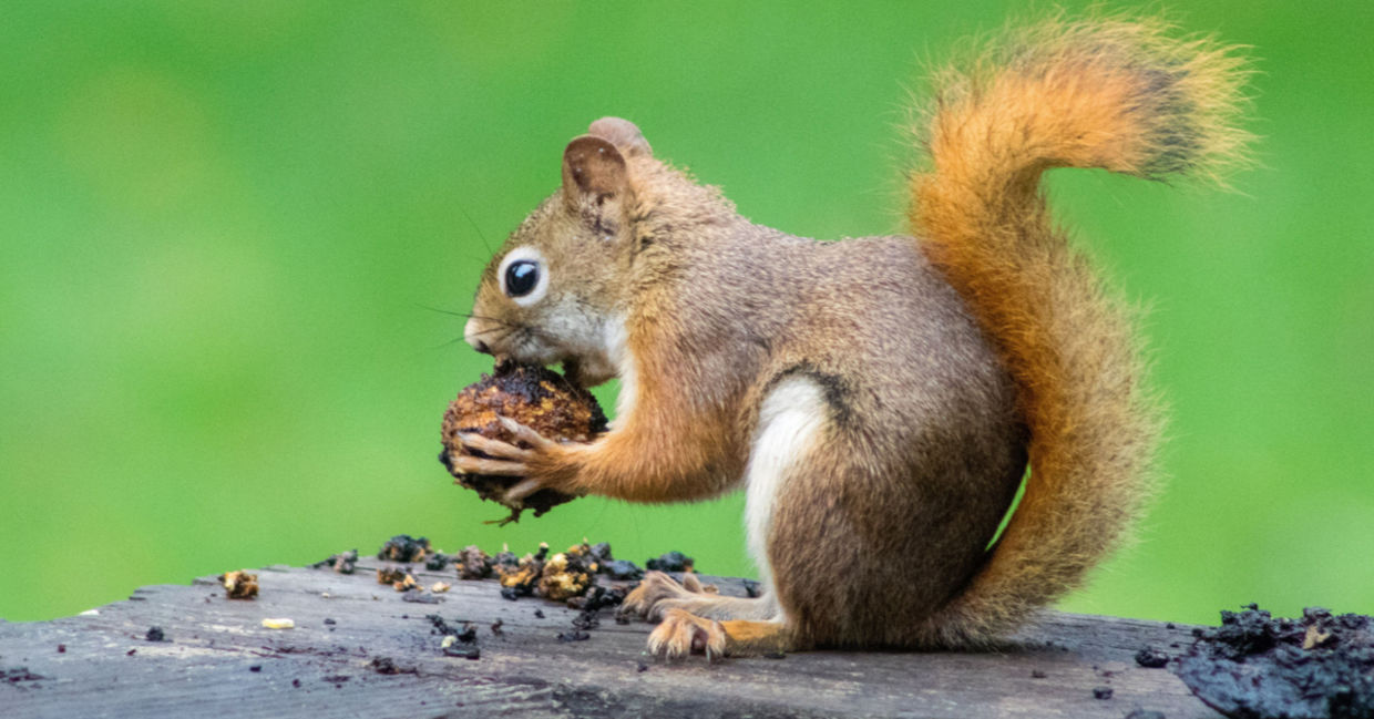 10 Fun Facts about Animals to Make You Smile - Goodnet