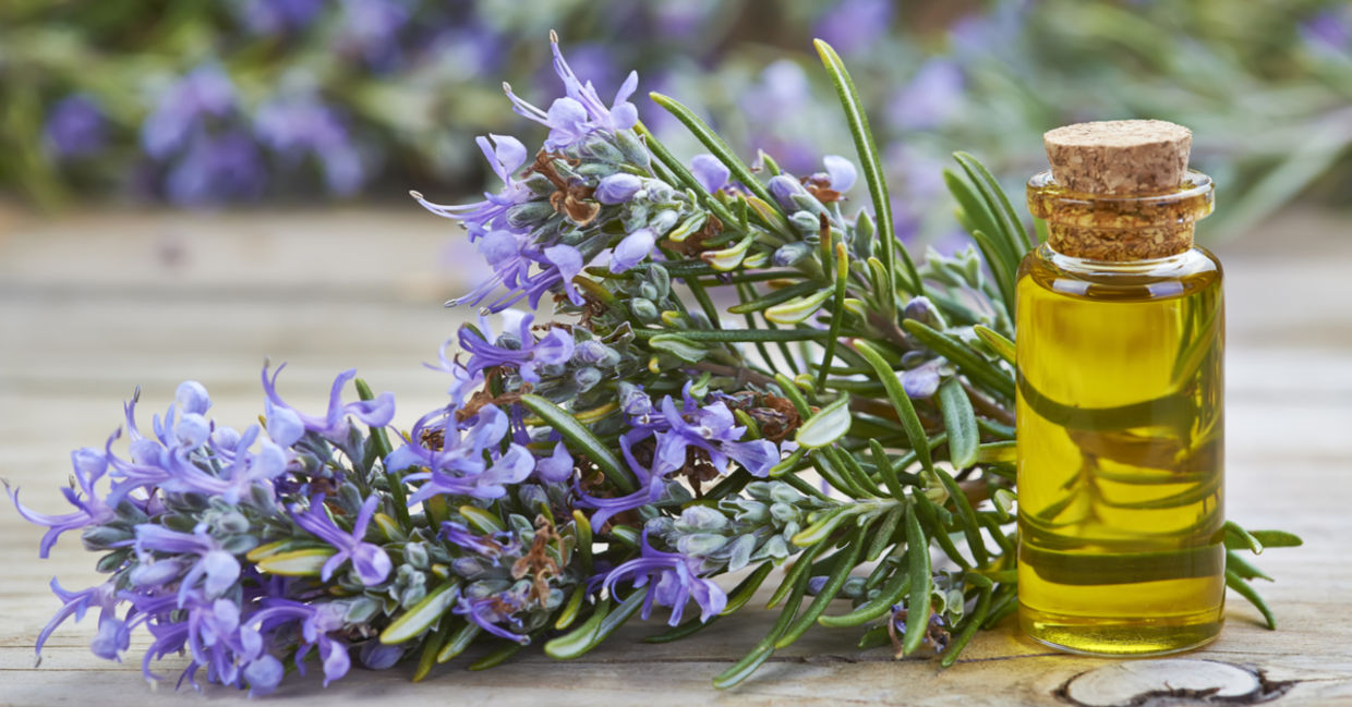 One of the best essential oils for headaches is rosemary.