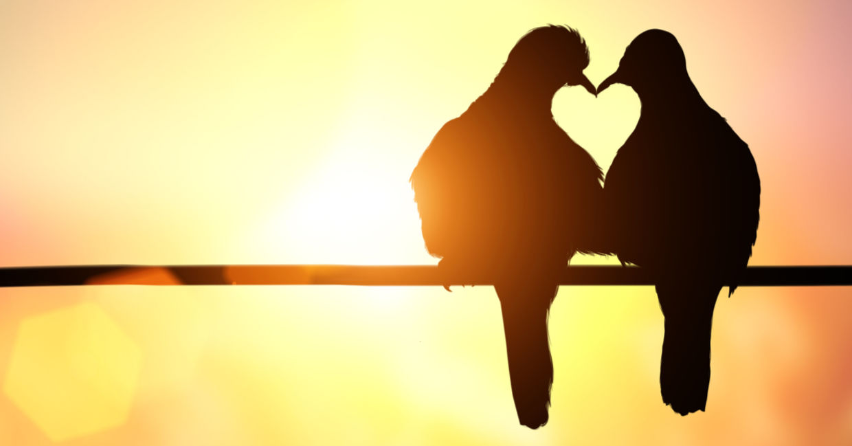 Two birds perch lovingly, their beaks and bodies touch to form the silhouette  of a heart.