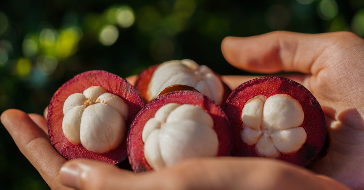 Woman holding Mangosteen, a tropical fruit  with health benefits.